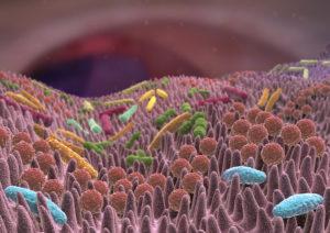 Кишечные бактерии влияют на аутистическое поведение у мышей