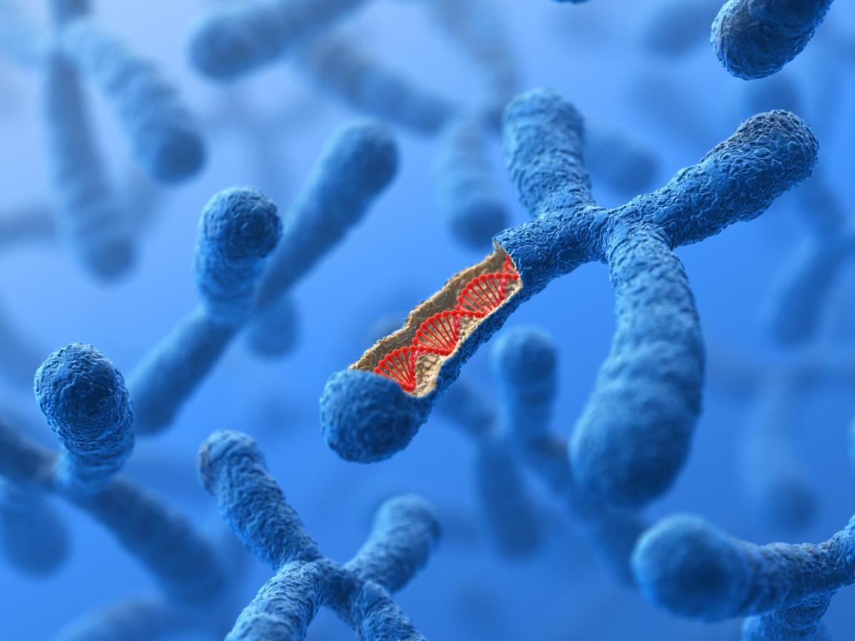 Часть 2. Немного теории: чтение ДНК, аллели, поломки генов